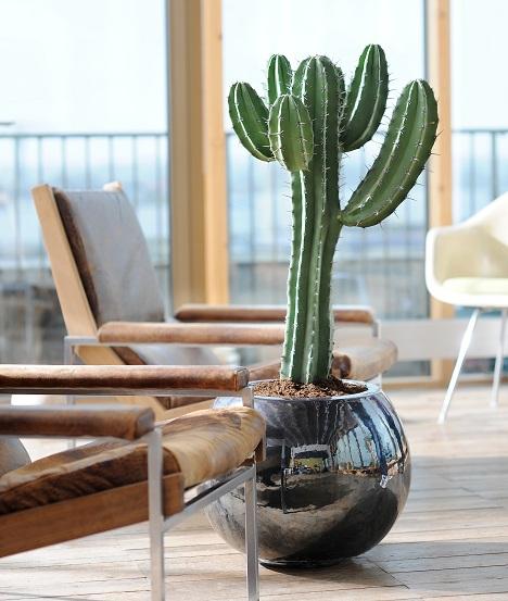 Diamoci al verde le piante in salone positivit e relax - Cactus da interno ...