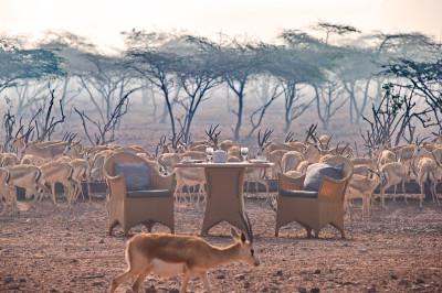 Hi_DIRS_64827950_breakfast_with_gazelles