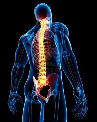 13757475-3d-rendered-medical-x-ray-illustration-of-male-spine-anatomy