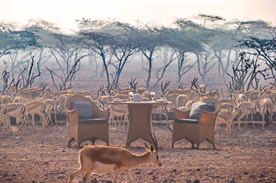 Hi_DIRS_64827950_breakfast_with_gazelles